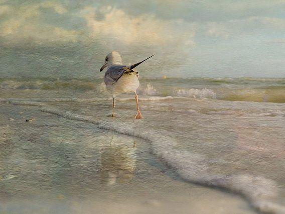 Een wandeling langs het strand.