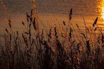 Sonnenuntergang auf dem Wasser von Laura Weijzig