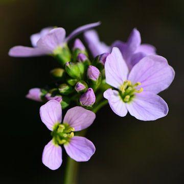 Kleine Blumen(2) von Gerard de Zwaan