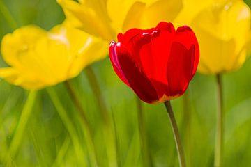 Rot über Gelb von Bas Berkhuijsen