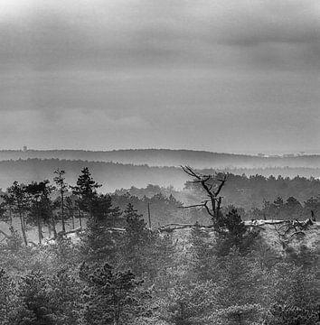 De Duinen in de mist van jeroen akkerman