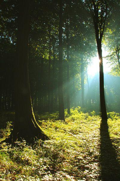 Sonnnenstrahlen im Wald von Ostsee Bilder