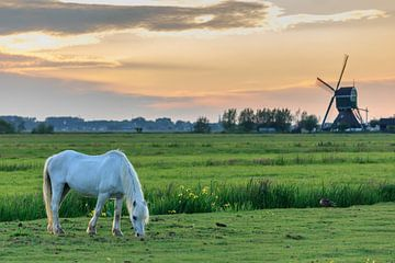 Grazend paard bij windmolen de Bachtenaar (kleur) van Stephan Neven