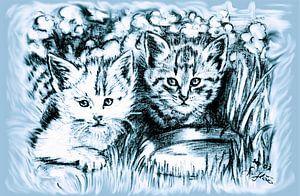 Blue Baby Cats van
