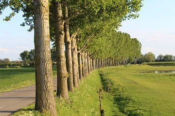 Fahrt mit Pappeln auf dem Veerweg in Beusichem. von Geert Visser