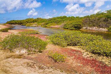 Landschap met mangrovebos en water op het eiland Bonaire van Ben Schonewille
