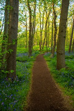 Spaziergang zwischen den Bäumen von Margreet Frowijn
