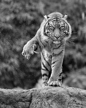 """Dieser Tiger """"schüttelt ihn ab""""(Schwarz-Weiß-Version) von Patrick van Bakkum"""