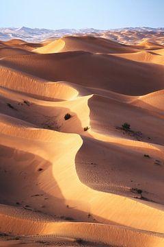 Rub Al Khali Empty Quarter Wüste Oman