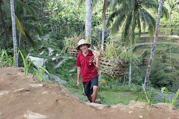 Indonesië: Javaanse arbeider van Raoul van de Weg