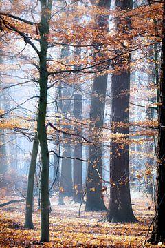 Herfstkleuren van Vandain Fotografie