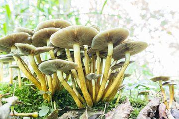 Groep paddenstoelen  van Tess Smethurst-Oostvogel