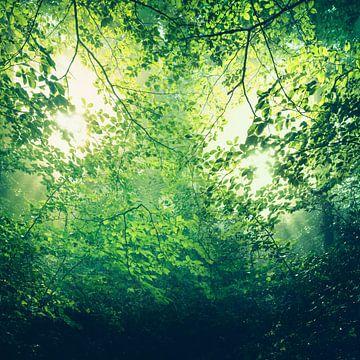 unreal green - sonnenlicht durch laubdach von Dirk Wüstenhagen