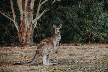 Kangourou sur Marscha van Druuten