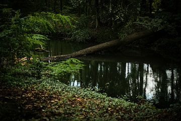 Het donkere mysterieuze bos | natuurfotografie van Diana van Neck Photography