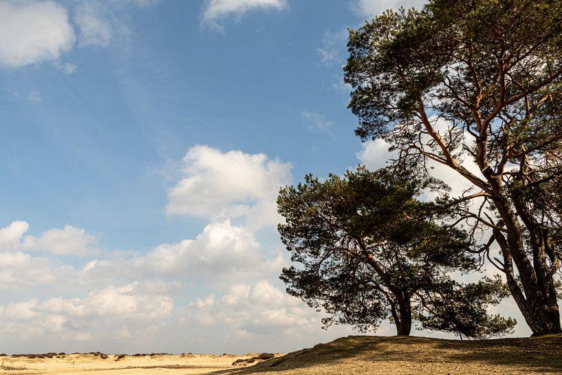 Niederländische Landschaft von Anjo ten Kate