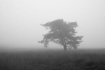 Einsamer Baum im Nebel von Cor de Hamer