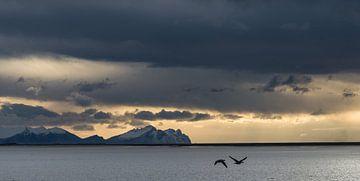 Ganzen vliegen voorbij in het avondlicht aan de IJslandse kust van