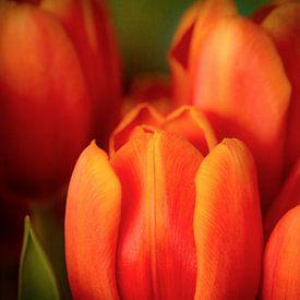 Oranje tulpen van Corinna van der Ven