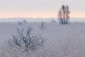 Zonsopgang in het Fochteloër Veen in Drenthe van