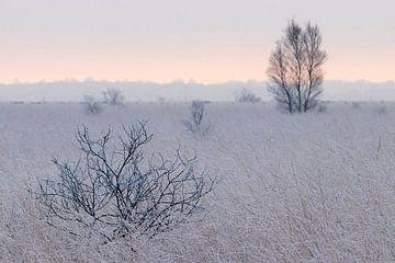 Zonsopgang in het Fochteloër Veen in Drenthe von Karin de Jonge