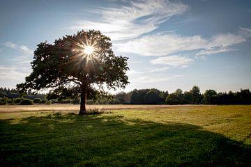 Landschap met boom van Pierre Verhoeven