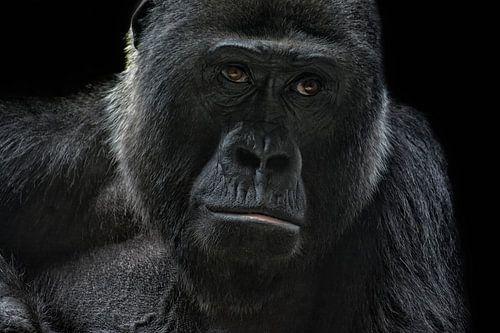 Gorilla von Joachim G. Pinkawa