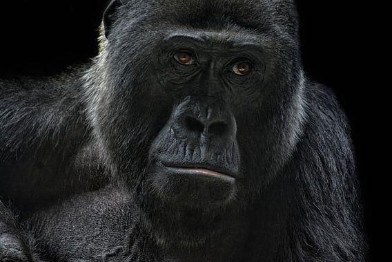 gorilla van Joachim G. Pinkawa