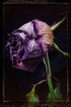 Alte Blumen 18 von Henk Leijen
