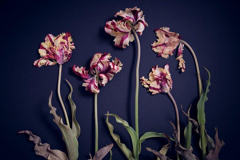Tuin van vergane rembrandt tulpen van Karel Ham