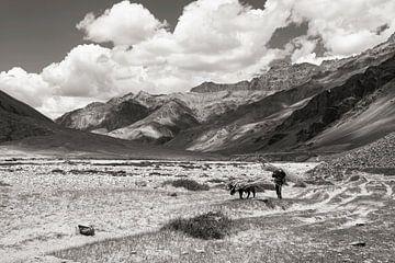 Man en paard met wilgenhout in het Himalaya gebergte van Affectfotografie