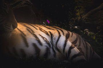 Tiger-Textur von Sandra Hazes