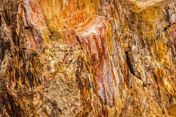 Versteend hout van Rinus Lasschuyt Fotografie