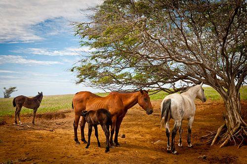 Paarden en veulens onder een boom in een weiland