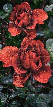 Herbst Rose von Christine Nöhmeier