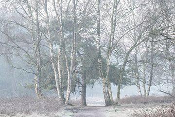 koude bomen in de mist van Tania Perneel