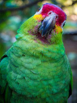 Portret van een groene papegaai (parrot) van Michiel Dros