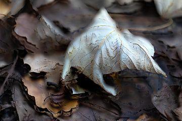 Herbstblatt von Ingrid Van Damme fotografie