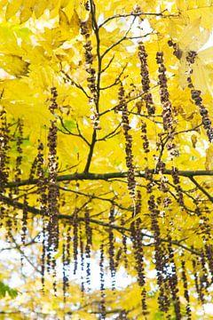 bomen van Gwen Mustamu