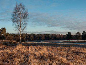 Winterlandschap von Bert Cornelissen