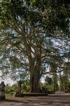 oude grote boom in ubud op bali van Compuinfoto .