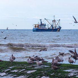 Vissersboot en meeuwen van didier de borle