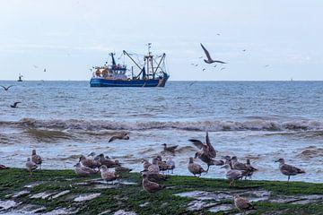 Fischerboot und Möwen von didier de borle