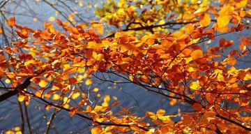 Herbstlicher Wald von Thomas Jäger