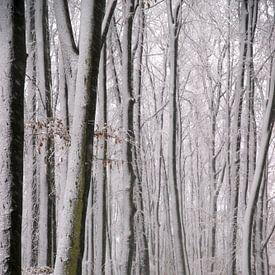 Bankje in de sneeuw van Ton van Buuren
