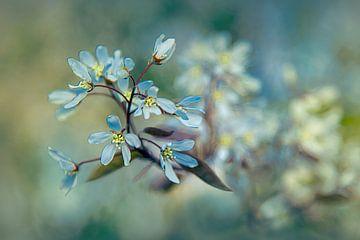 Blühender Baum von Piotr Aleksander Nowak