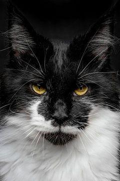 Nahaufnahme einer Maine Coon-Katze von Nikki IJsendoorn