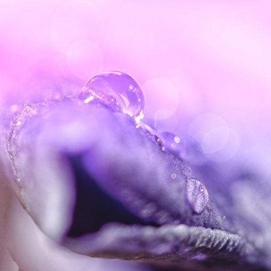 Beauty in nature van Jessica Berendsen