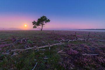 Violetter Morgen über die Hilversumer Heide von Michiel Dros
