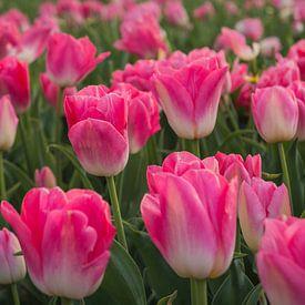 Roze tulpen van Anita Loos